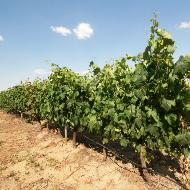 Portuguese wine regions - Alentejo