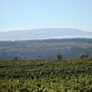Portuguese wine region - Dao