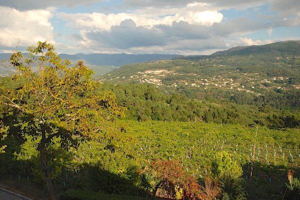 Vineyards of the Adega do Salvador