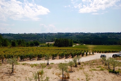 Quinta de Lemos Vineyards