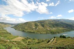 Discover Portuguese wine regions