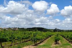 Discover Portuguese Wine Tours