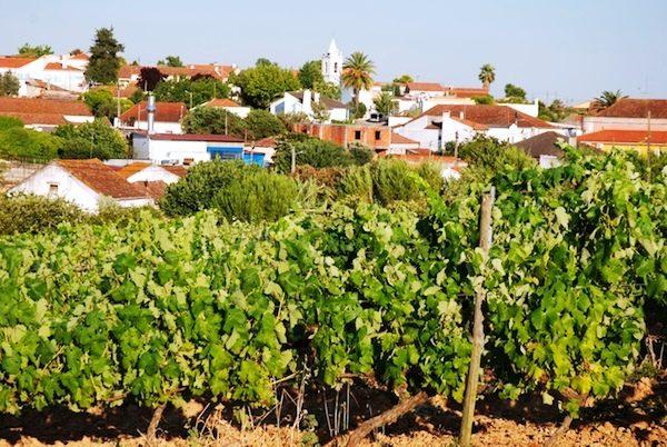 Wine Tour Lobos